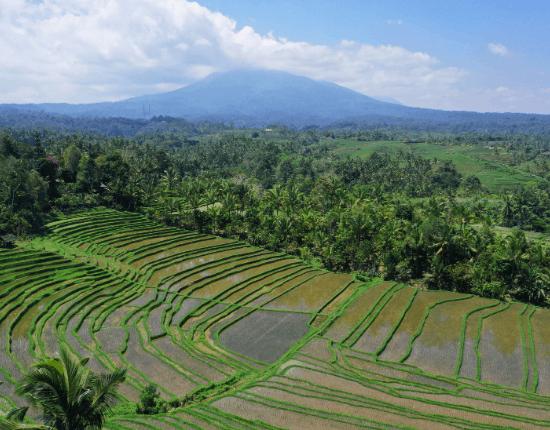 Bali hautnah-1